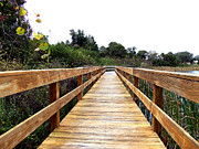 Christopher  Mercer - Twin Lakes Boardwalk