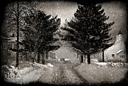 Winter Roads Prints - Twin Pines  Print by Dorothy Walker