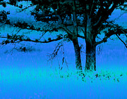 Bonnie Bruno - Twin Trees