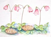 Twinflower Print by Virginia Ann Hemingson