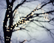 Tree Photograph Prints - Twinkle Print by Lupen  Grainne