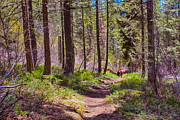 Twisp Photo Prints - Twisp River Trail Print by Omaste Witkowski