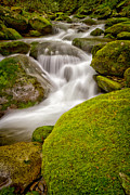 Smokey Mountains Prints - Twist Print by Todd Bielby