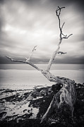 Black And White Nature Landscapes Framed Prints - Twisted Framed Print by Adam Romanowicz