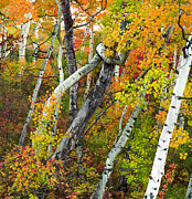 Tim Reaves - Twisted Aspens