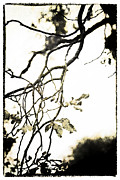Branch Metal Prints - Twisted Branches Metal Print by David Ridley