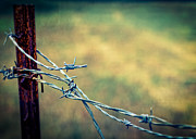 Barbed Wire Fence Framed Prints - Twisted Framed Print by Caitlyn  Grasso
