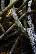 Anaz Art and Photography - Twisted Nature I