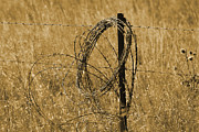 Barbed Wire Fences Framed Prints - Twisted - Sepia Framed Print by Mary Carol Story