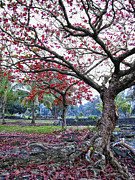 Red Leaves Photos - TWISTED TREE of HILO by Daniel Hagerman