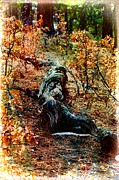 Forest Floor Prints - Twisted Tree Trunk Print by Barbara Chichester
