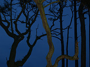 Hunting Island Posters - Twisted Trees at Twilight Poster by Anna Lisa Yoder