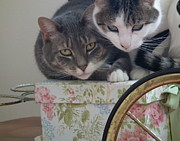 Cherie Sky - Two Adorable Cats...
