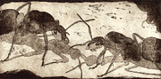 Ant Art - Two ants in communication - etching by Urft Valley Art