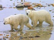 Anne Gordon - Two Bears Walking