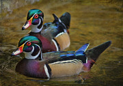Wood Duck Framed Prints - Two Beauties Framed Print by Deborah Benoit