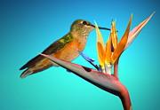 Joyce Dickens - Two Birds Of Paradise