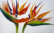 Strelitzia Painting Posters - Two Birds of Paradise Poster by Susan Duda