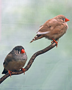 Birds On A Branch Posters - Two Birds On A Branch Poster by Diane Bell