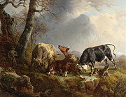 Grey Clouds Digital Art - Two bulls defend against a cow attacked by wolves by Jacques Raymond Brascassat