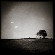 Iphone Photos - Two Clouds and a Tree by David Bowman