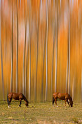 James BO  Insogna - Two Colorado High Country Mystic Autumn Horses