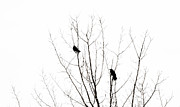 Sihlouette Posters - Two Crows Poster by Marilyn Hunt