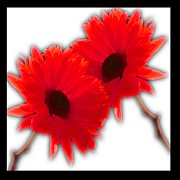 Lyman Loveland - Two Flowers - red -...