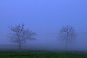 Travel Photography Prints - Two Foggy Trees Print by Brian Harig