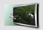 Critters Digital Art Framed Prints - Two Geese In Flight - OOF Framed Print by Brian Wallace