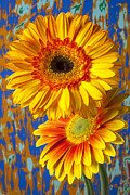 Flowers Gerbera Posters - Two golden mums Poster by Garry Gay