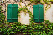 Riquewihr Framed Prints - Two Green Shutters and Ivy in Alsace Framed Print by Greg Matchick