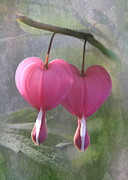 Bleeding Heart Photos - Two Hearts by Angie Vogel