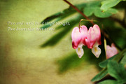 Dicentra Spectabilis Posters - Two Hearts Poster by Darren Fisher