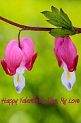 Dicentra Spectabilis Prints - Two Hearts Valentines Day Print by Heidi Smith