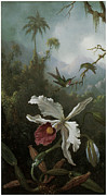 Hummingbird Painting Prints - Two Hummingbirds Above a White Orchid Print by Martin Johnson Heade