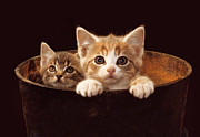 Friendliness Posters - Two Kittens Poster by Mike Flynn