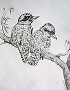 Australia Drawings - Two kookaburra by Roberto Gagliardi