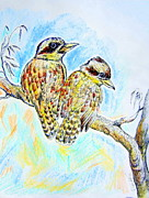 Australia Drawings - Two kookaburras in color by Roberto Gagliardi