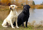Labs Paintings - Two Labs by Robert Smith