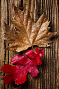 Autumn Leaf Photo Metal Prints - Two leafs  Metal Print by Garry Gay