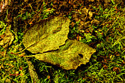 Forest Floor Photos - Two Leaves by The Feathered Lady