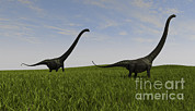 Three Dimensional Posters - Two Mamenchisaurus Walking Poster by Kostyantyn Ivanyshen
