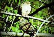 Gena Weiser - Two Mourning Doves