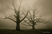 Pasture Digital Art Posters - Two Oak Trees And Fog Poster by Dave Gordon