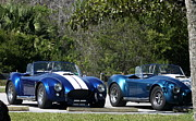 Christiane Schulze Posters - Two Of Them - Shelby Cobra Poster by Christiane Schulze