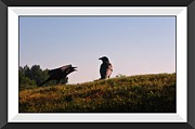 Crows Greeting Cards Prints - Two Old Crows Print by John Malone
