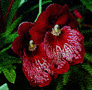 Omaha Ne Photos - Two Orchids by Elizabeth Winter