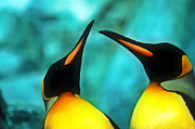 Duo Painting Posters - Two penguins Poster by Lanjee Chee