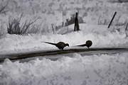 Pheasant Photos - Two Pheasants by Thomas Young